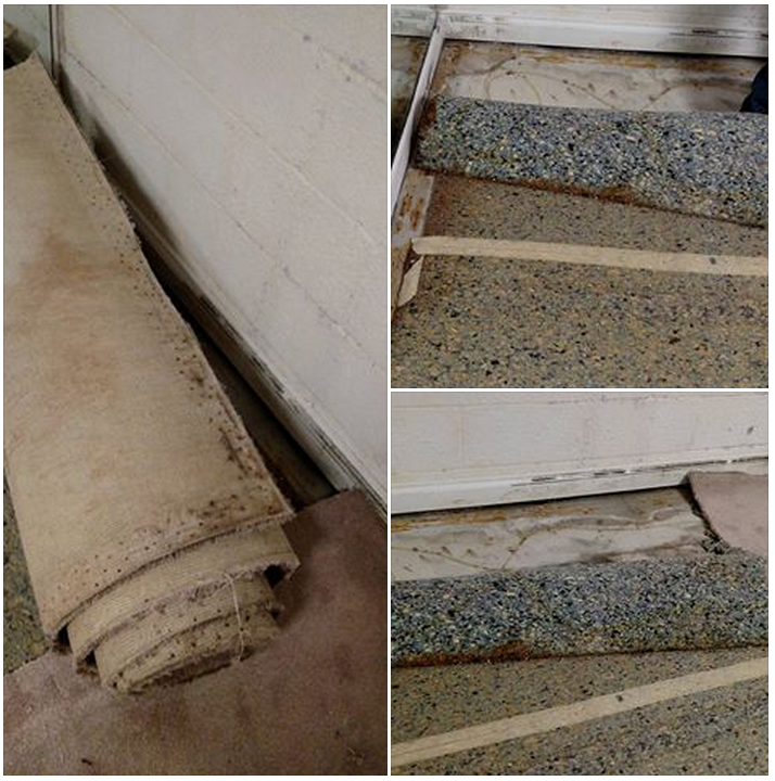 Basement Flooding, Clean-Up And Mold Removal/Remediation